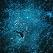 Baleine au large de la péninsule de Valdés, Argentine. ©Yann Arthus-Bertrand